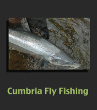 Fly fishing experiences, guiding, fly casting tuition for salmon and trout accessing private beats on the beautiful river Eden with Glyn Freeman a fully qualified A.A.P.G.A.I instructor.